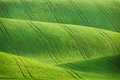 Lines and waves fields Royalty Free Stock Photo