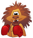 Lion boxer Royalty Free Stock Image