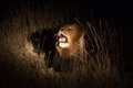 Lion in the bush at night Royalty Free Stock Photography