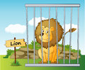 Lion in cage illustration of a and wooden board Stock Photography