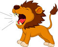 Lion cartoon roaring illustration of Stock Image