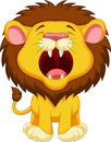Lion cartoon roaring illustration of Stock Photos