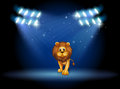 A lion at the center of the stage with spotlights illustration Royalty Free Stock Photography