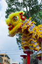 Lion dance on the meihuaquan man doing in most important festival in vietnam Stock Images