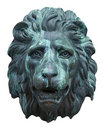 Lion face Stock Images