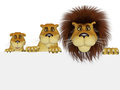 Lion family with a blank sign isolated on the white background Stock Photo
