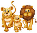 Lion on family with cute cub Royalty Free Stock Photo