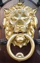 Lion Head Royalty Free Stock Image