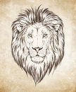 Lion head graphic vector illustration Royalty Free Stock Photo