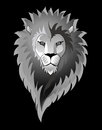 Lion isolated on black Royalty Free Stock Photo