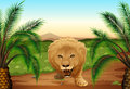 A lion at the jungle illustration of Stock Photos