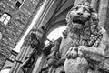 Lion at Loggia dei Lanzi  in Piazza della Signoria,  Florence Royalty Free Stock Photo