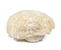 Lion mane mushroom isolated on white background Royalty Free Stock Photo