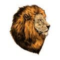 Lion proud, face in profile