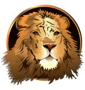 The lion s head on a white background vector color graphic image of Royalty Free Stock Images