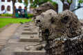 Lion sculptures at independence square in colombo sri lanka a row of traditional the is symbolic for the sinhalese Royalty Free Stock Photos