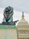 Lion Statue in Front of the US Capitol Building Royalty Free Stock Image