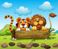 A lion and a tiger hiding illustration of Royalty Free Stock Images