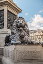 Lion from trafalgar square london edwin henry landseer is sculpturer of four bronze lions which are base of nelson s column in Royalty Free Stock Photos