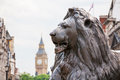 Lion in trafalgar square london england bronze sculpture with big ben the background Stock Images