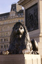 Lion at trafalgar square sunning in london Royalty Free Stock Photos