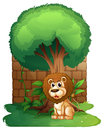 A lion under a big old tree illustration of on white background Royalty Free Stock Photos