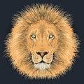 Lion vector illustartion Royalty Free Stock Photo