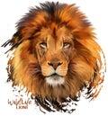 Lion watercolor painter