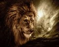 Lion in wildlife against a stormy sky Stock Image