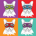 5 liona set of portraits of dogs in motorcycle glasses. Vector illustration