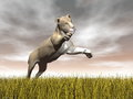 Lioness hunting d render one jumping while focusing on something upon yellow grass by cloudy brown day Royalty Free Stock Photography
