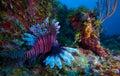 Lionfish (Pterois) near coral, Cayo Largo, Cuba Royalty Free Stock Photos