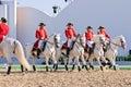 Lipizzan Stallions show Royalty Free Stock Photo