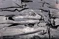 Liquid bitumen texture Royalty Free Stock Photo