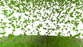Liquid like green juice falling on white surface or screen. Use for background or overlay. Alpha channel is included use