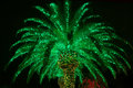 Lit outdoor christmas palm tree a royal up green for the holidays Royalty Free Stock Image