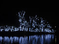 Lit trees for christmas in ibirapuera park são paulo brazil Royalty Free Stock Photo