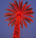 Lit Up Palm Tree Stock Image