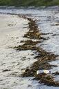 Litter on the shore pet bottle and ras lwale zanzibar channel pwani region tanzania africa Royalty Free Stock Image