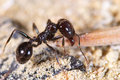Little Ant Royalty Free Stock Photography