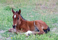 Little baby horse on a fresh green grass Royalty Free Stock Photo