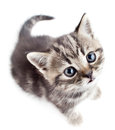 Little baby kitten looking upwards top view Stock Photos