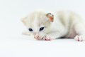 Little baby kitten on white background Stock Image
