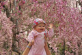 Little baby touching cherry blossom in Kyoto Stock Photos