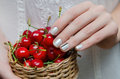 Little basket of cherries in woman hands Royalty Free Stock Photo