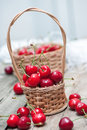 Little basket of cherries. Royalty Free Stock Photo