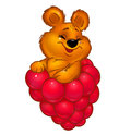 Little Bear and raspberries Royalty Free Stock Photos