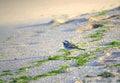 Little bird on a beach single Stock Images