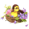 Little bird, gift and flowers background