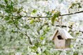 Little birdhouse in spring with blossom cherry flower sakura shallow dof Royalty Free Stock Images
